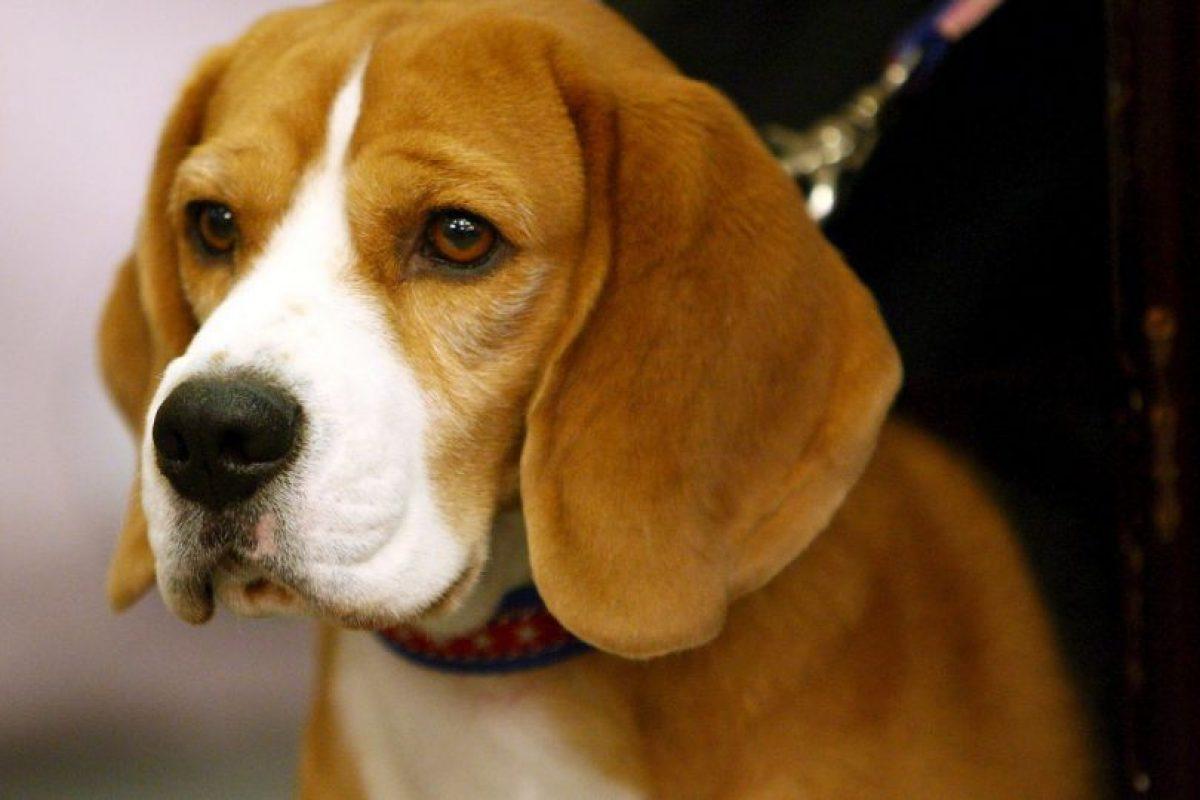 Las víctimas más comunes de las prácticas son los perros. Foto: Getty. Imagen Por: