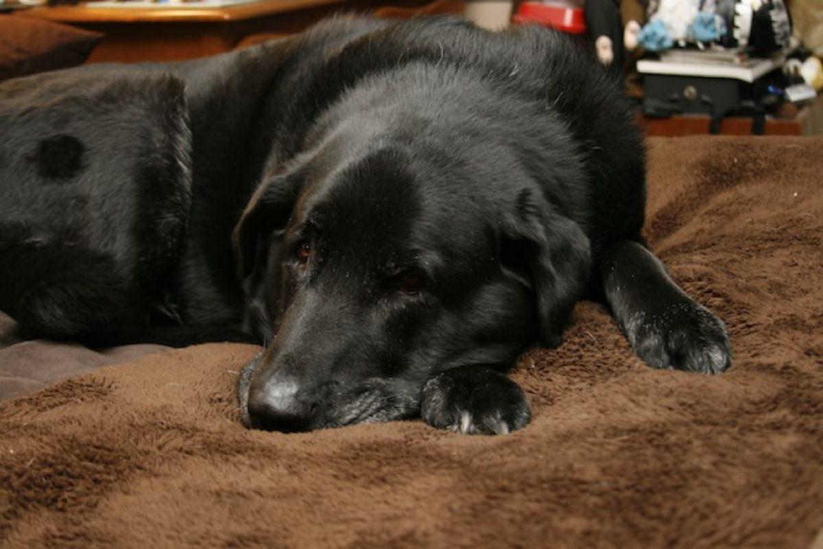 Si no pueden dormir, no importa. Acostarse y cerrar los ojos es suficiente para descansar, ya que reduce la presión arterial y el estrés. Foto:Flickr. Imagen Por: