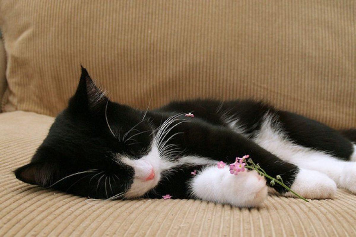 Las siestas mejoran la capacidad de tomar decisiones, la creatividad y la percepción sensorial. Foto:Flickr. Imagen Por: