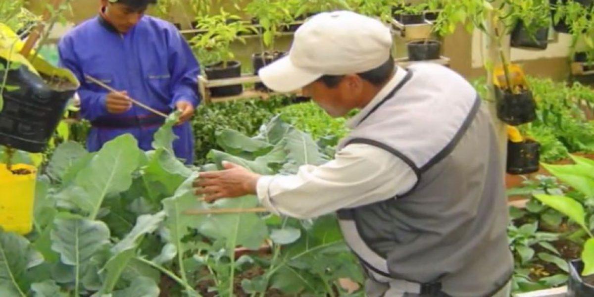 Estudio revela crecimiento de la agricultura urbana en Latinoamérica