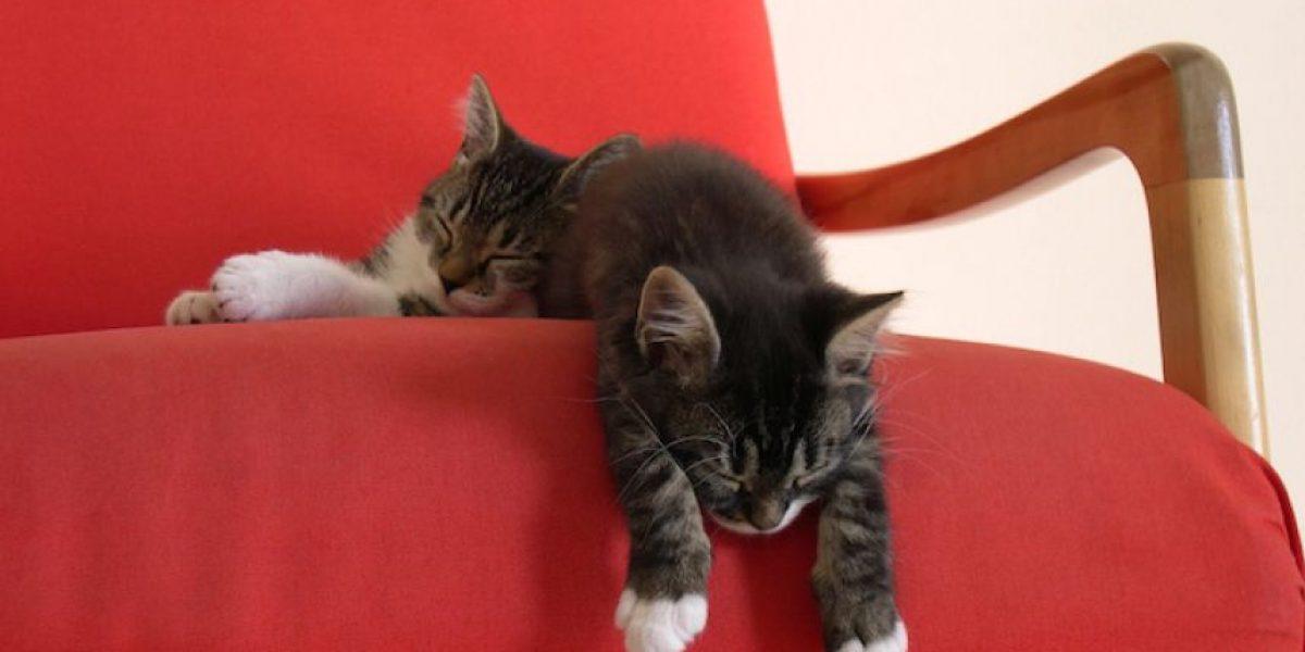 Estudio: Las personas que duermen siesta mueren jóvenes