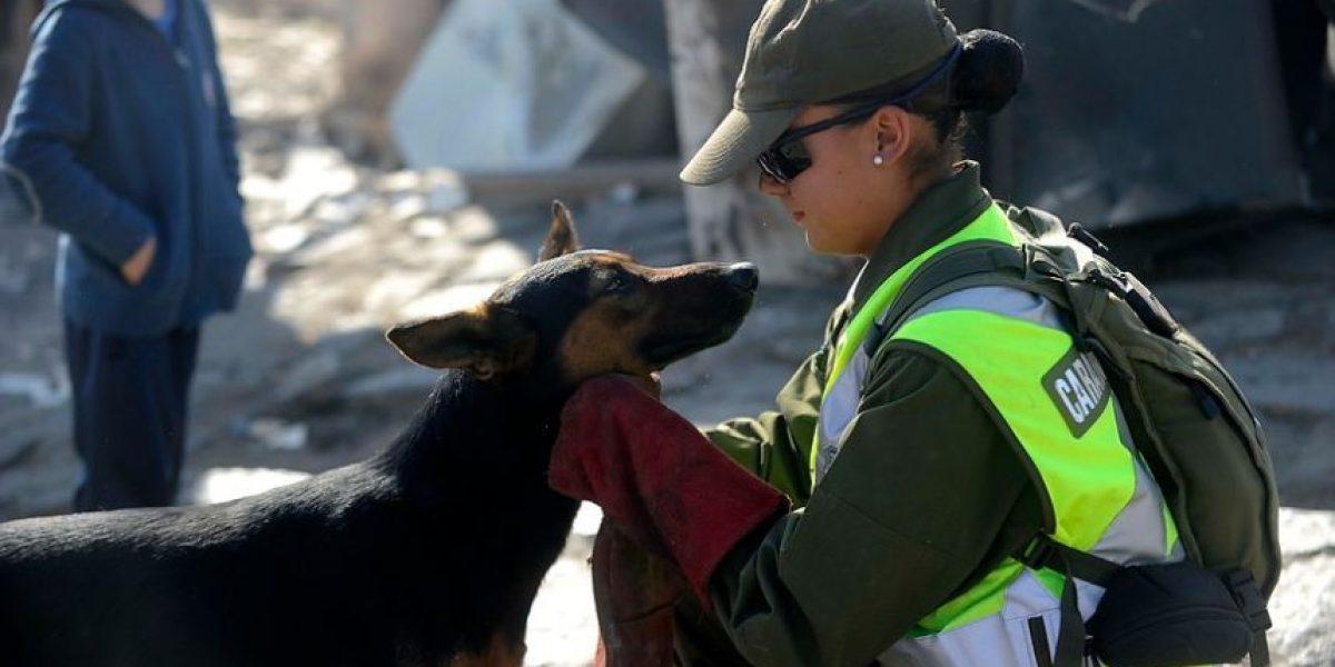 Destacan imagen del tierno gesto de una carabinera con un perro afectado en Valparaíso