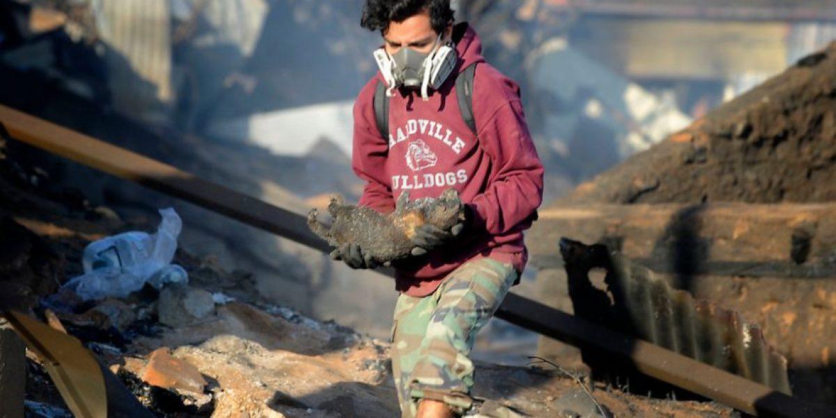 [FOTOS] Jóvenes voluntarios rescatan cuerpos de animales calcinados en Valparaíso