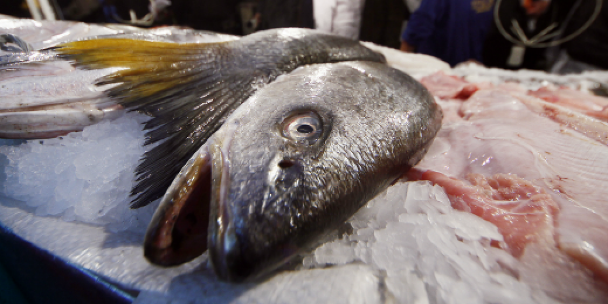 Sernac: hay diferencias de precios de 200% en pescados y 170% en mariscos