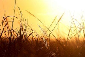 Campos de caña de azúcar en Florida, Estados Unidos Foto:Getty. Imagen Por: