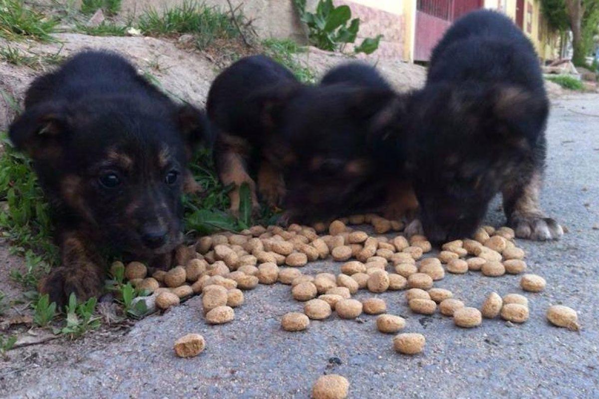 Foto:Facebook / anamaria.ciulcu. Imagen Por: