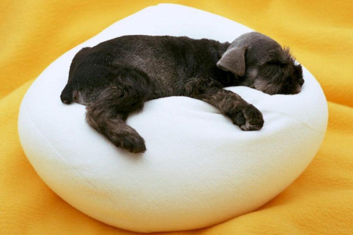 Expectativa: Cuando es cachorro, dormirá toda la noche. Foto: Buzzfeed. Imagen Por: