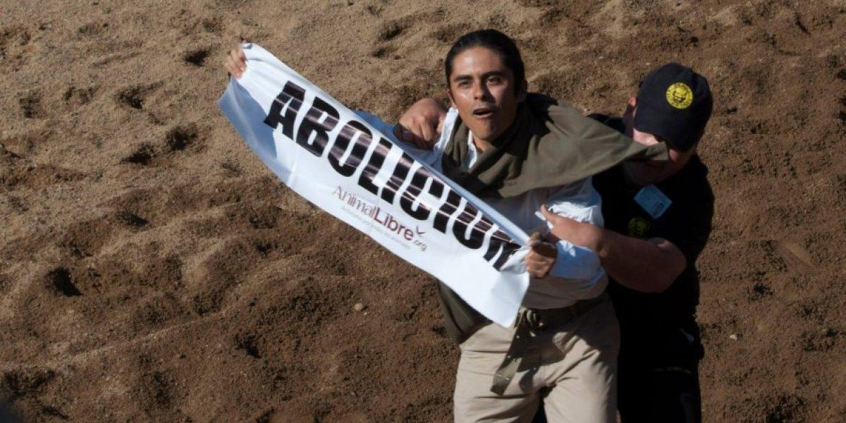Animalistas hacen denuncia al CNTV por emisión de Rodeo y es desestimada