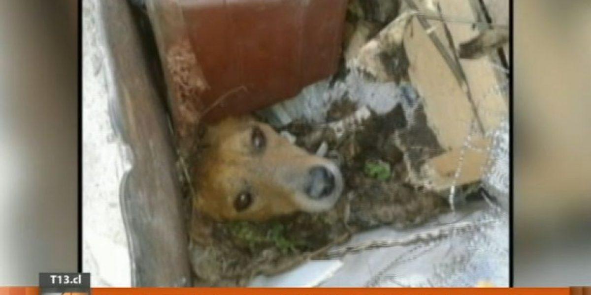 Rescatan a perrita que estaba enterrada viva en un basurero