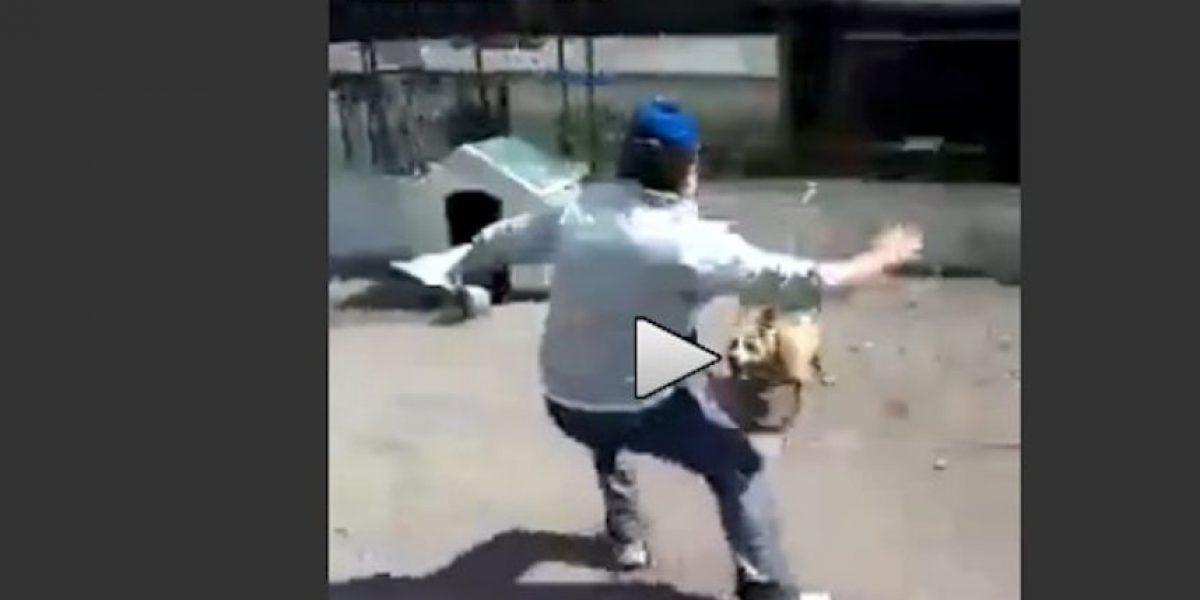 "Video: Por molestar a perro ""pitbull"" este hombre recibe su merecido"