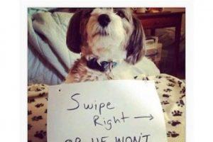 13. No usen a sus mascotas para conseguir likes Foto:Instagram. Imagen Por: