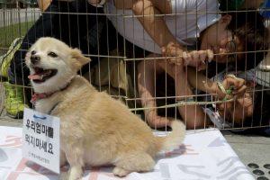 La mujeres suelen maltratar ahorcando a los animales Foto:Getty Images. Imagen Por: