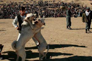 Los animales de compañía son las víctimas más comunes de crueldad Foto:Getty Images. Imagen Por: