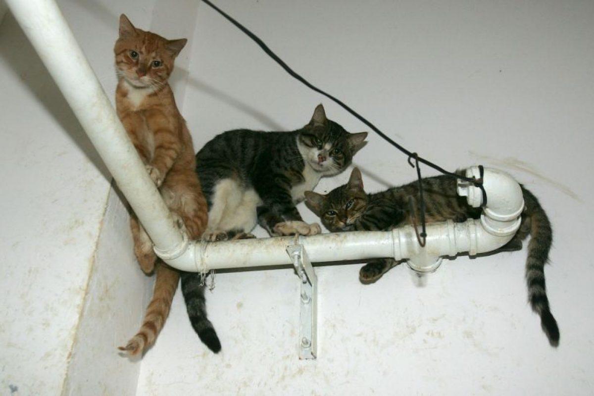 Hombres adultos y adolescentes son quienes más cometen actos de crueldad animal Foto:Getty Images. Imagen Por: