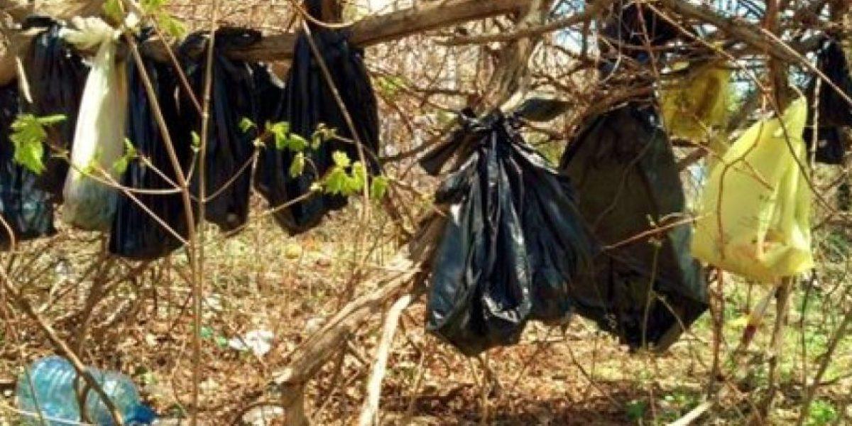 Hallan en 25 gatos muertos colgando en árbol de Nueva York