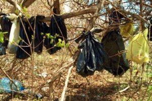 La mayoría de los animales se encontraban en estado de descomposición Foto:AP. Imagen Por: