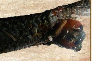 Foto:Ecología Montenegrina. Imagen Por: