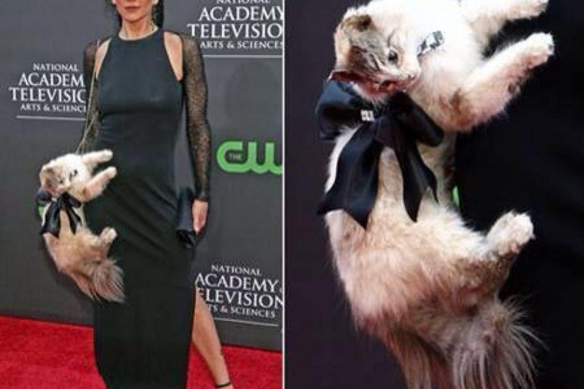 La actriz Stacy Haiduk se presentó con este gato disecado a una entrega de premios. Foto: Getty. Imagen Por: