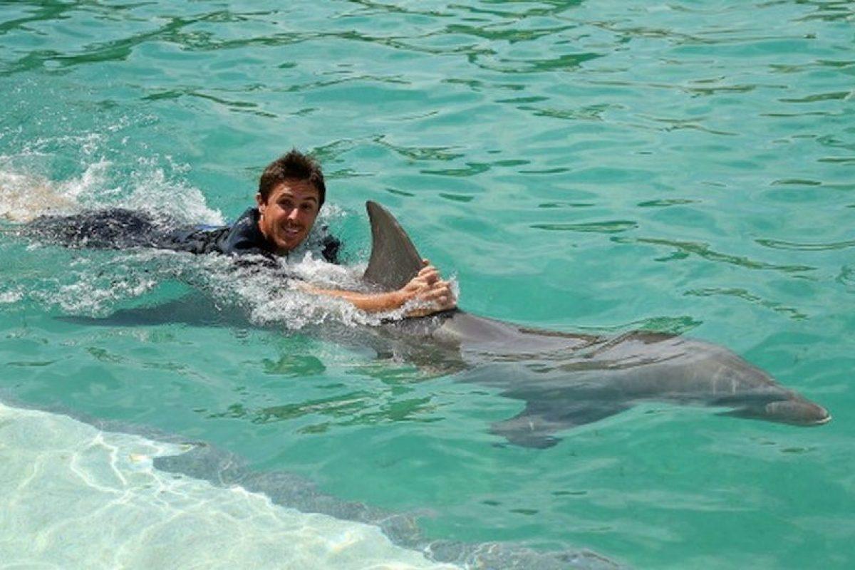 La cabeza de los delfines contiene unórgano redondo usado para la ecolocalización. Foto:Getty. Imagen Por: