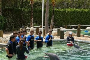 Los delfines tienen un cuerpo ágil yadaptado para nadar a gran velocidad. Foto:Getty. Imagen Por: