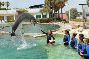 Los delfines tienen la vista muy desarrollada, tanto dentro como fuera del agua, ypueden escuchar diez veces más que un humano. Foto:Getty. Imagen Por: