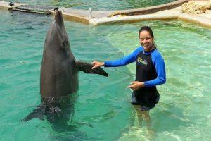 Los delfines son animales sociables y viven en manadas de hasta doce miembros. Foto:Getty. Imagen Por: