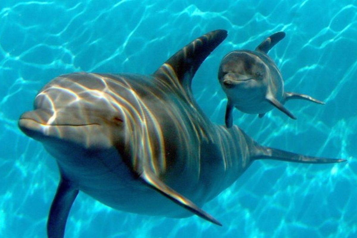 Los delfines son mamíferos marinos relacionados con las ballenas Foto:Getty. Imagen Por: