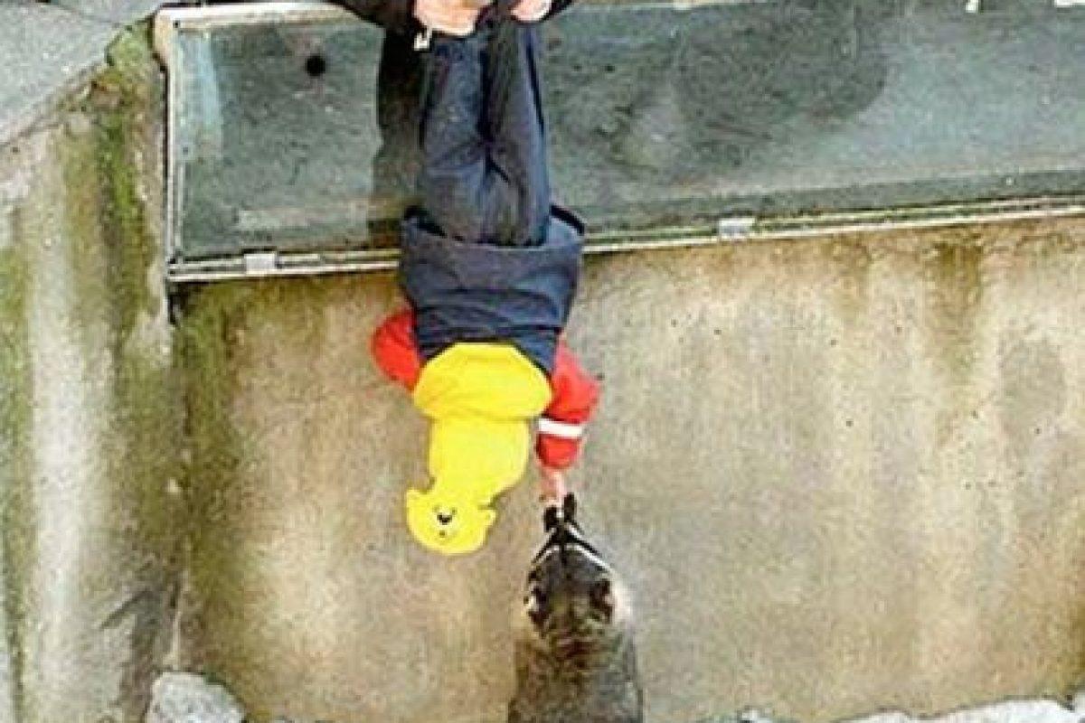 Una forma original de alimentar a los mapaches Foto:Internet. Imagen Por: