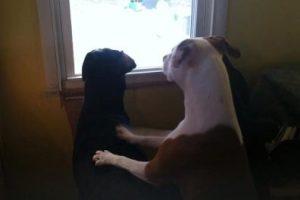 Tucker y Mickey en la ventana Foto:Facebook Christina Summitt. Imagen Por: