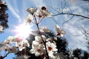 El día del árbol fue emulado por otros países. Foto:Arbor Day Foundation / Facebook. Imagen Por: