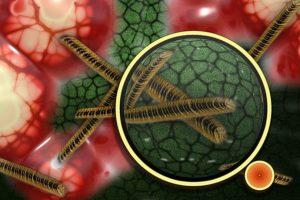 Las bacterias comunes que han sido tratables durante decenios volverán a ser potencialmente mortales. Foto:Pixabay. Imagen Por: