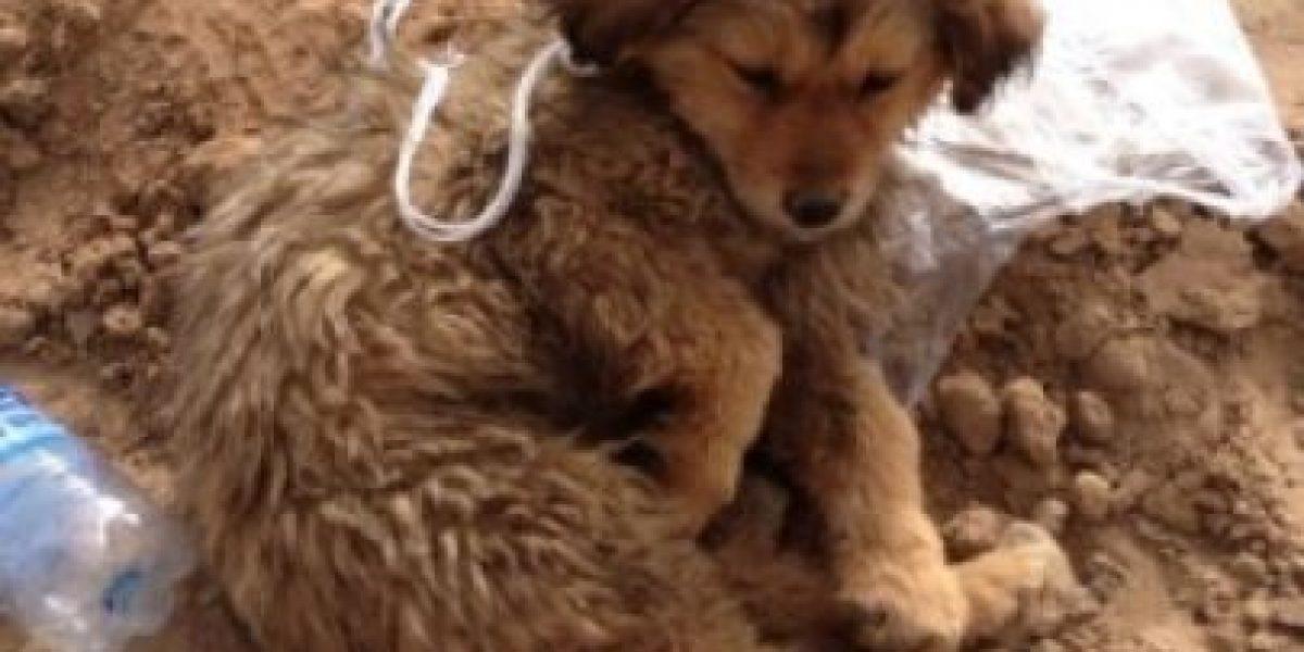 Entierran vivos a perros callejeros en China