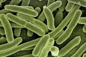 El mundo está abocado a una era posantibióticos en la que infecciones comunes y lesiones menores que han sido tratables durante decenios volverán a ser potencialmente mortales. Foto:Pixabay. Imagen Por: