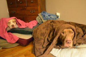 Quedarse en la cama en un día lluvioso. Foto: Captura de pantalla. Imagen Por: