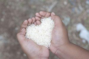 Meter la mano en el arroz. Foto: Getty. Imagen Por: