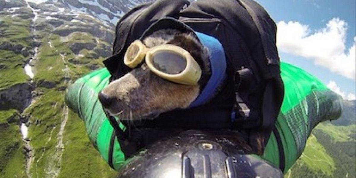 Video: Conozcan al primer perro paracaidista del mundo