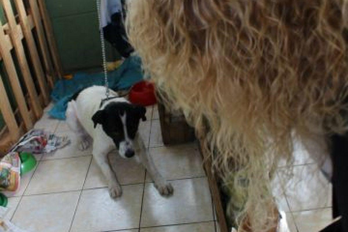 Foto:Facebook Hospital Veterinario de Campaña. Imagen Por: