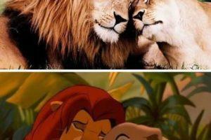 Simba y Nala del Rey León Foto:Facebook. Imagen Por: