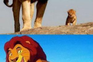 Mufasa y Simba del Rey León Foto:Facebook. Imagen Por: