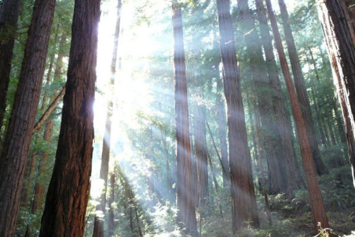 Komorebi (japonés) La luz del sol que se filtra entre las hojas de los arboles Foto:Wikipedia. Imagen Por: