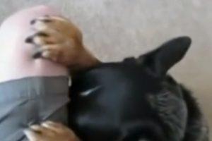 este perro reza antes de ingerir sus alimentos Foto:YouTube. Imagen Por: