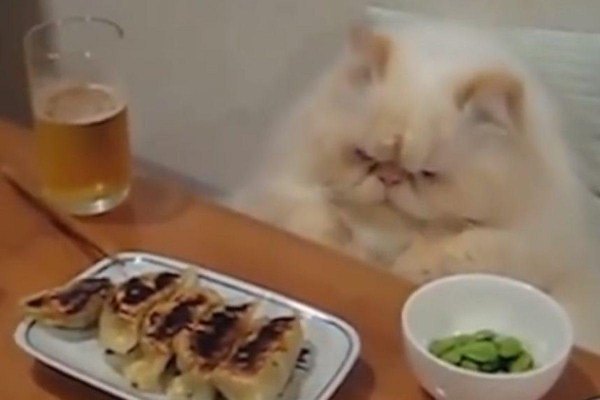 A este gato no le gustó lo que sirvieron para comer Foto:YouTube. Imagen Por: