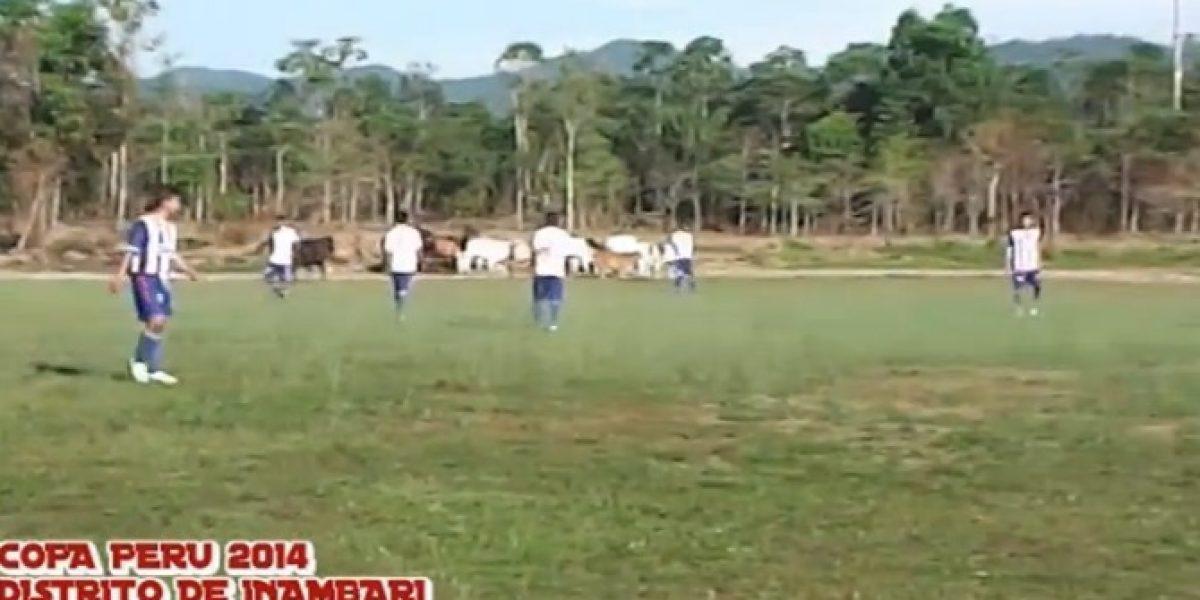 Video: ¿Cómo? Ganado invade la cancha de fútbol en pleno partido
