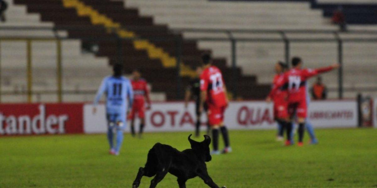 Iquique peleó ante la U boliviana, pero quedó fuera de la Sudamericana