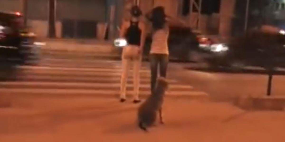 Perro enseña cómo es que se debe cruzar la calle