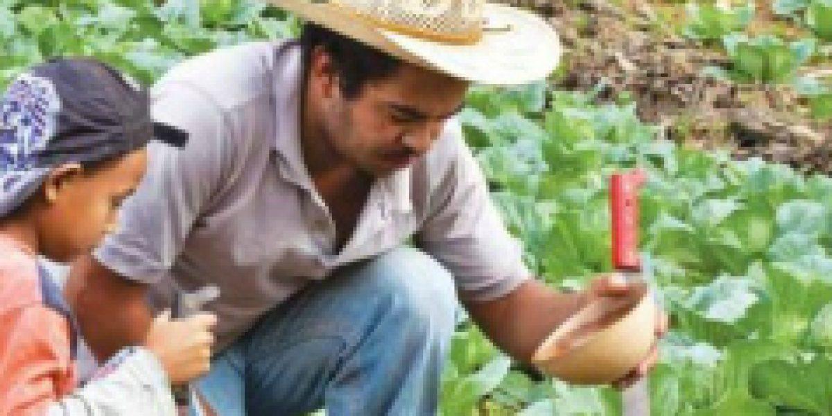 La agricultura familiar es vital para bienestar alimentario de América Latina