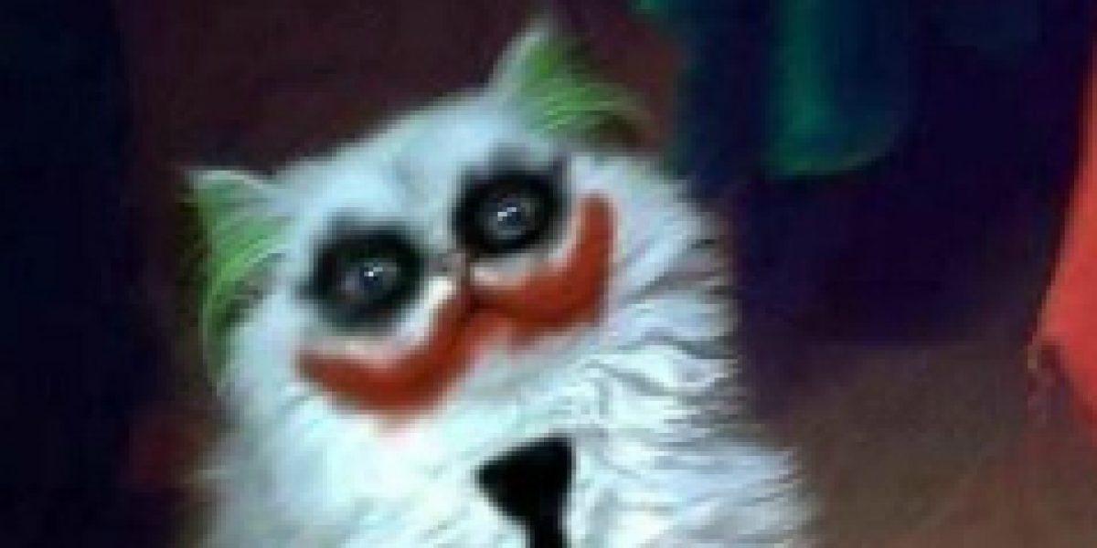 Pensando en Halloween: 30 adorables disfraces para gato que los harán reír