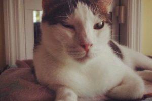 Foto:Vía Instagram @john_wayne_i_am_a_cat. Imagen Por: