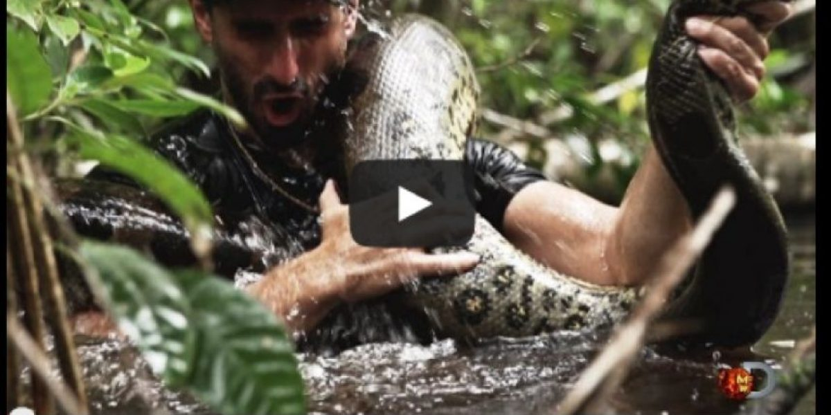 Así reacciona Internet a hombre que será tragado vivo por anaconda
