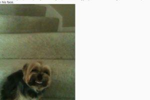 """Mi marica perro hace esta marica cara cada que llego a la casa. Todos los jodidos días, todos los jodidos días este marica perro se siente y hace este estúpido gesto"""", bromeó el dueño de este perro. Foto:Vía Reddit. Imagen Por:"""